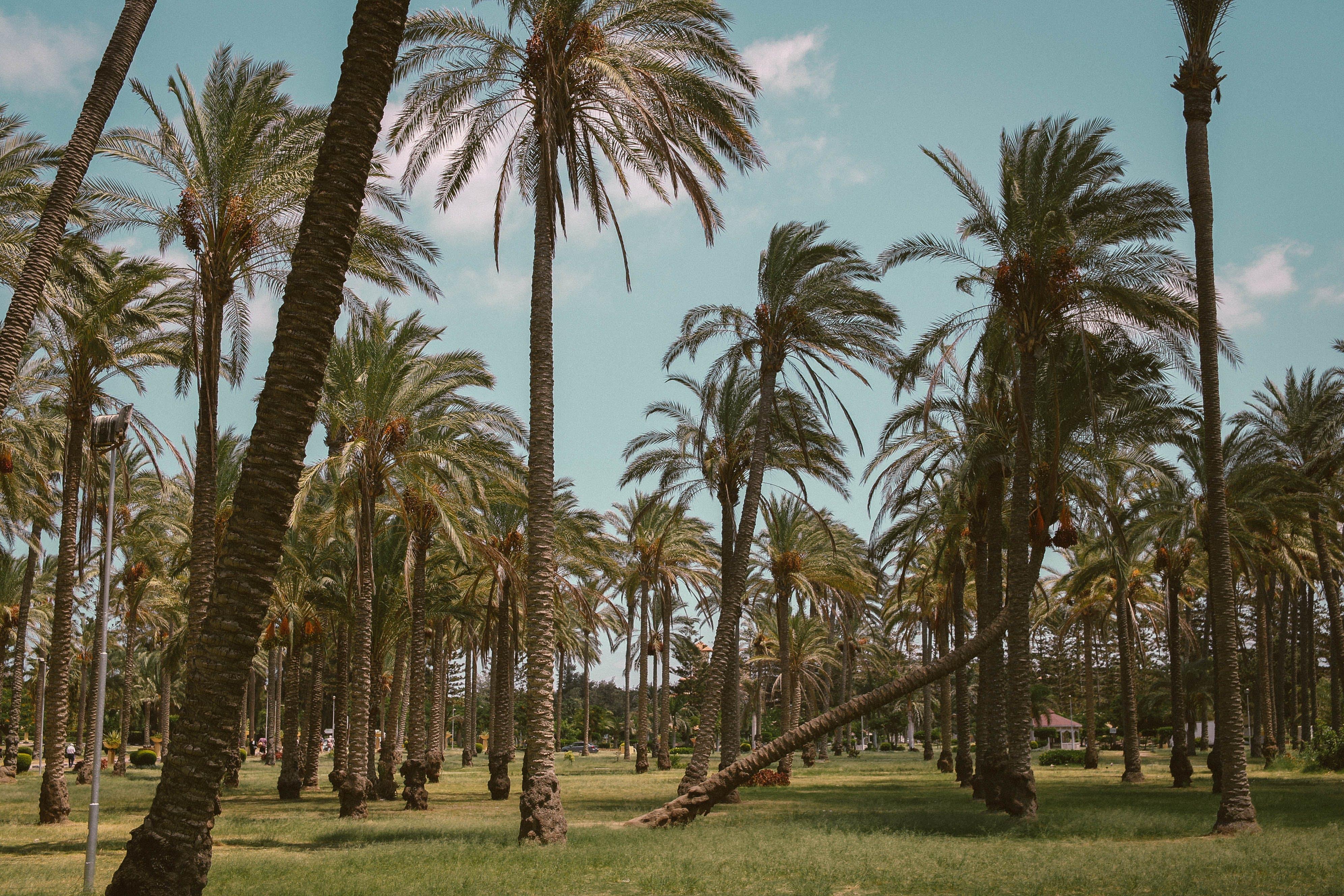 日光, 棕櫚樹, 樹木, 熱帶 的 免費圖庫相片