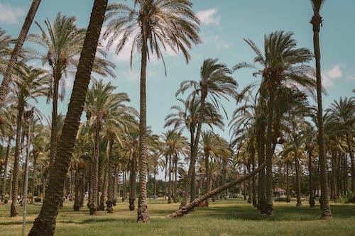 경치가 좋은, 야자나무, 열대의, 햇빛의 무료 스톡 사진