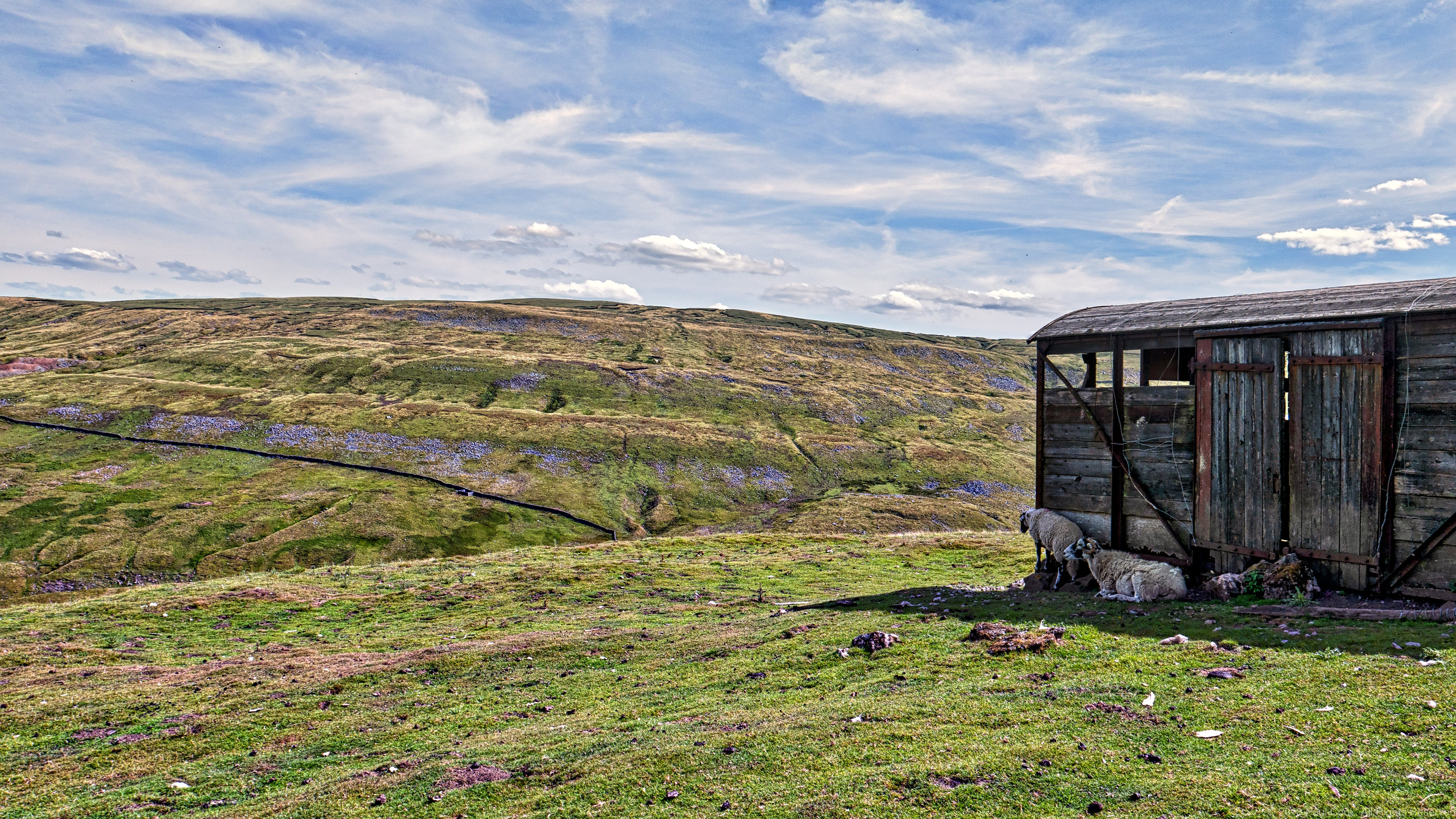 Free stock photo of Buttertub Pass landscape, shack, shed, sheep