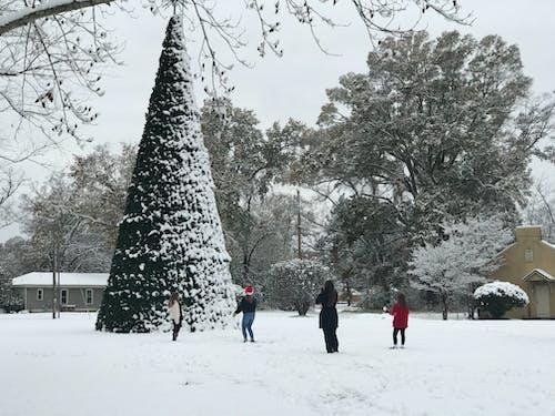 Free stock photo of snow, tree