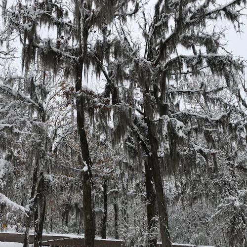 Free stock photo of moss, snow