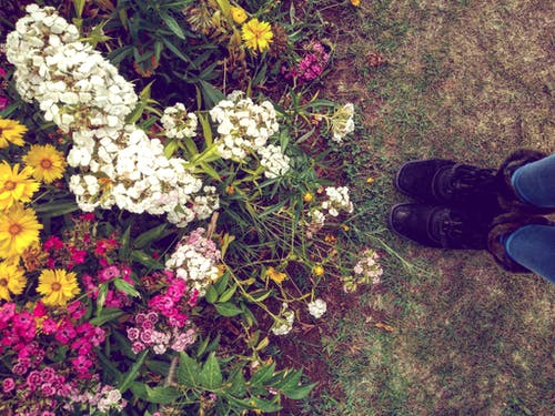 Ingyenes stockfotó csizma, természet, virágok témában