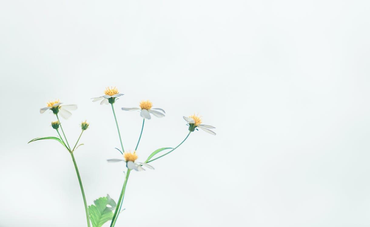 Mac 壁紙, 免費桌面, 植物群