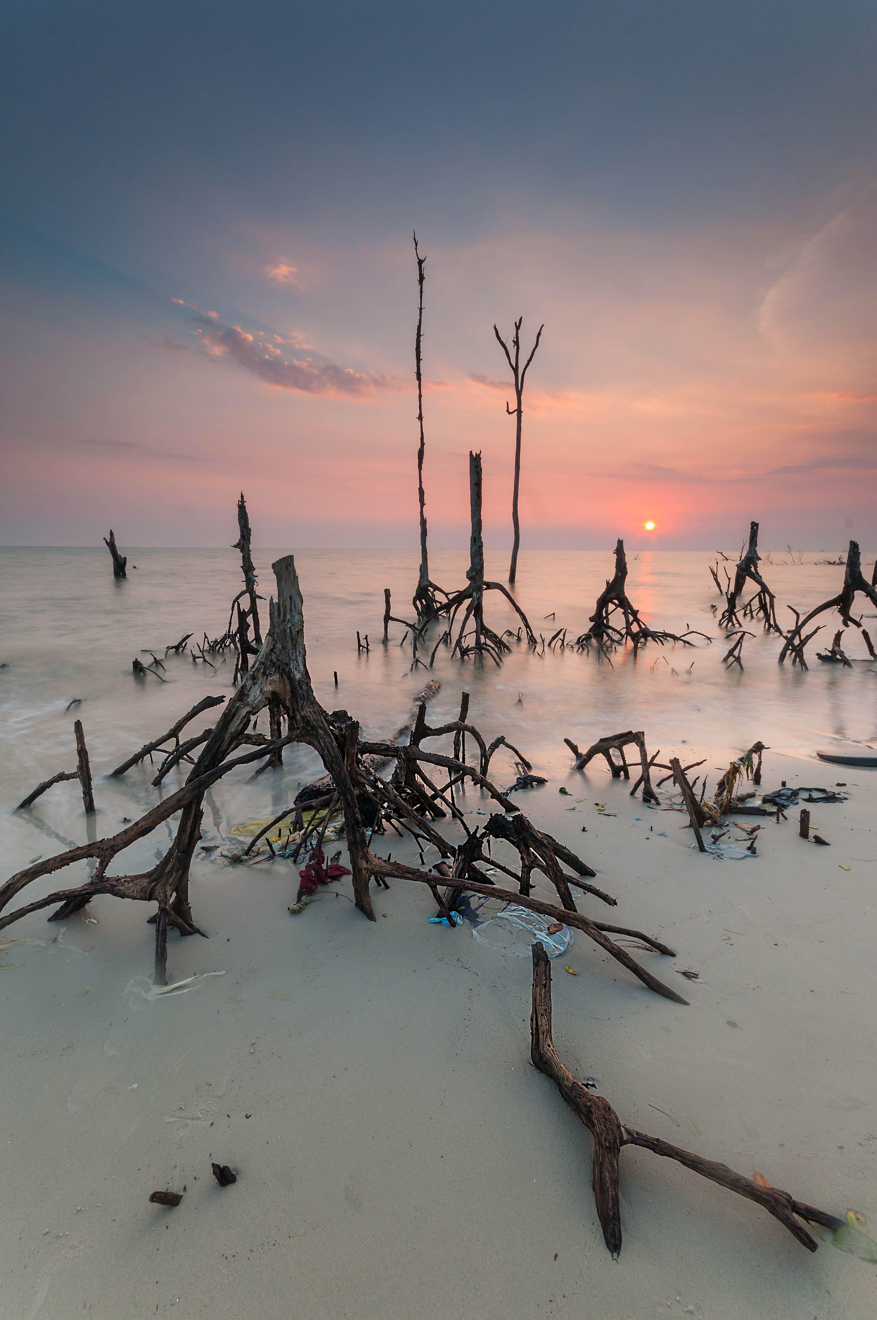 Free stock photo of landscape, sunset, beach, love