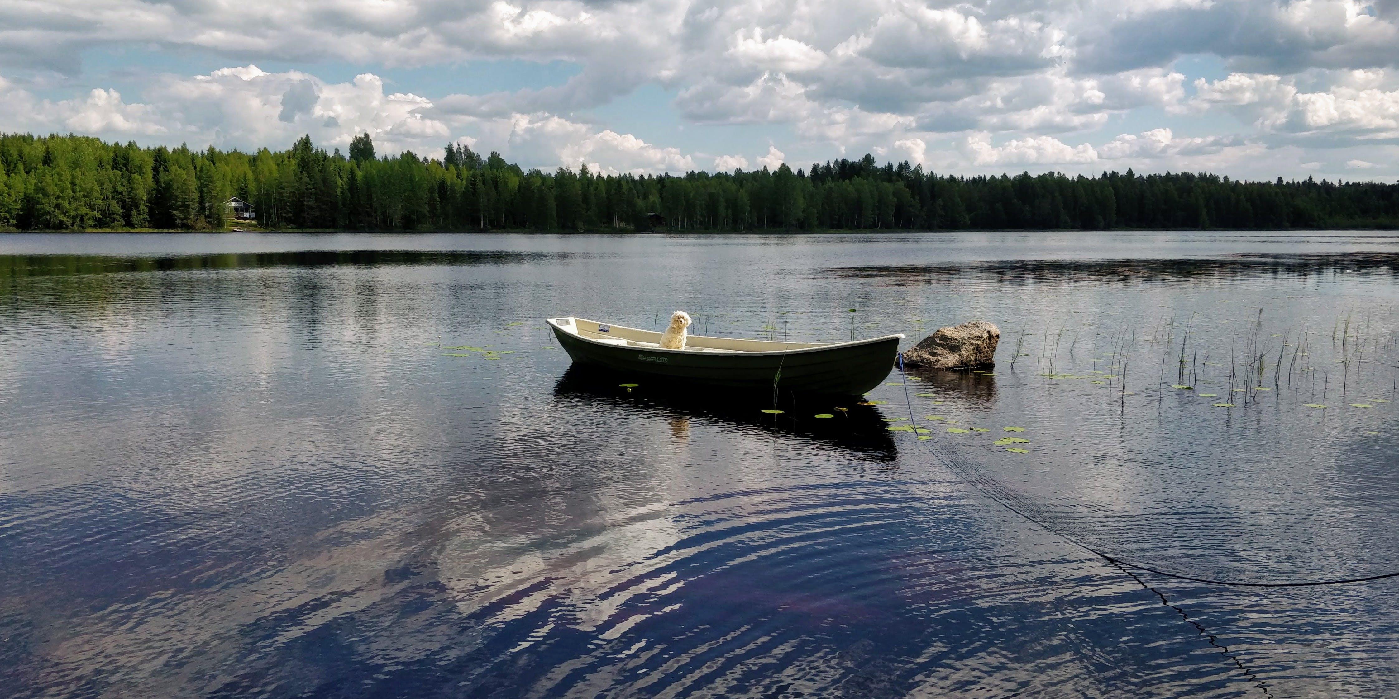 Gratis lagerfoto af aftensol, båd, Finland, hvid hund