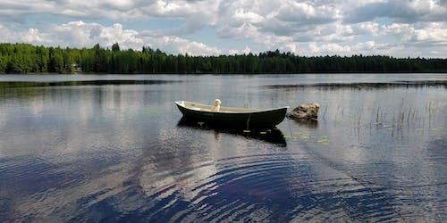 Gratis stockfoto met avondzon, boot, Bos, Finland