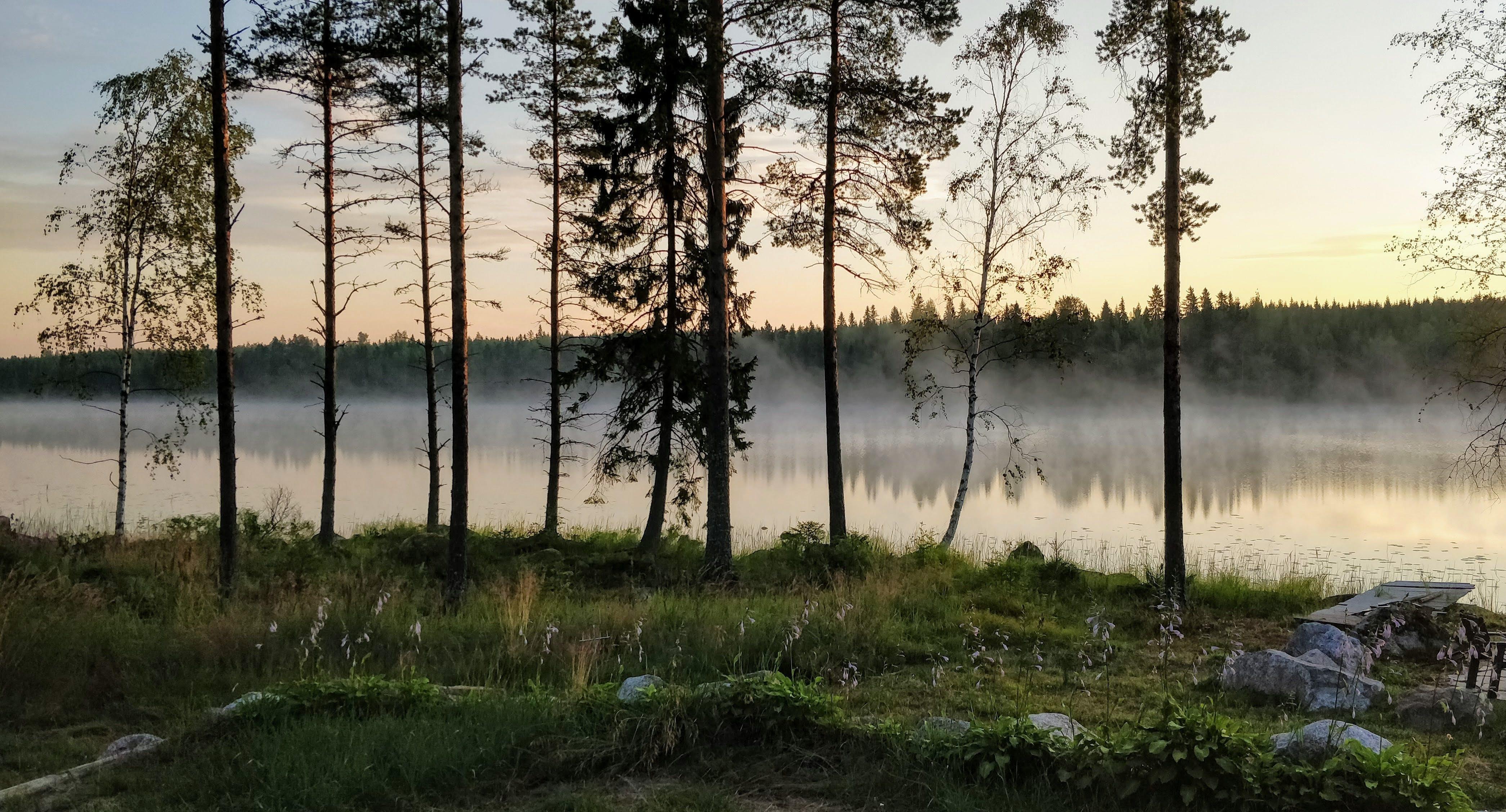 Gratis lagerfoto af Finland, skov, solopgang, sommer