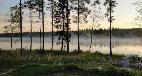 Безкоштовне стокове фото на тему «ліс, літо, рано вранці, схід сонця»
