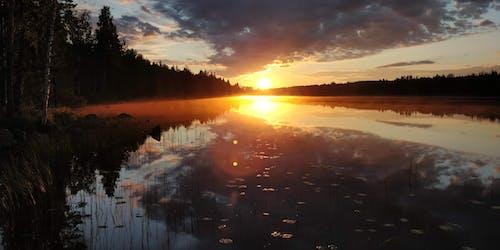 Gratis stockfoto met avondzon, Bos, Finland, zomer