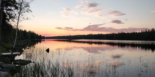 Безкоштовне стокове фото на тему «вечірнє сонце, ліс, літо, схід сонця»