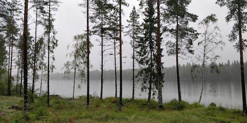 Безкоштовне стокове фото на тему «ліс, літо, туман, туманний»