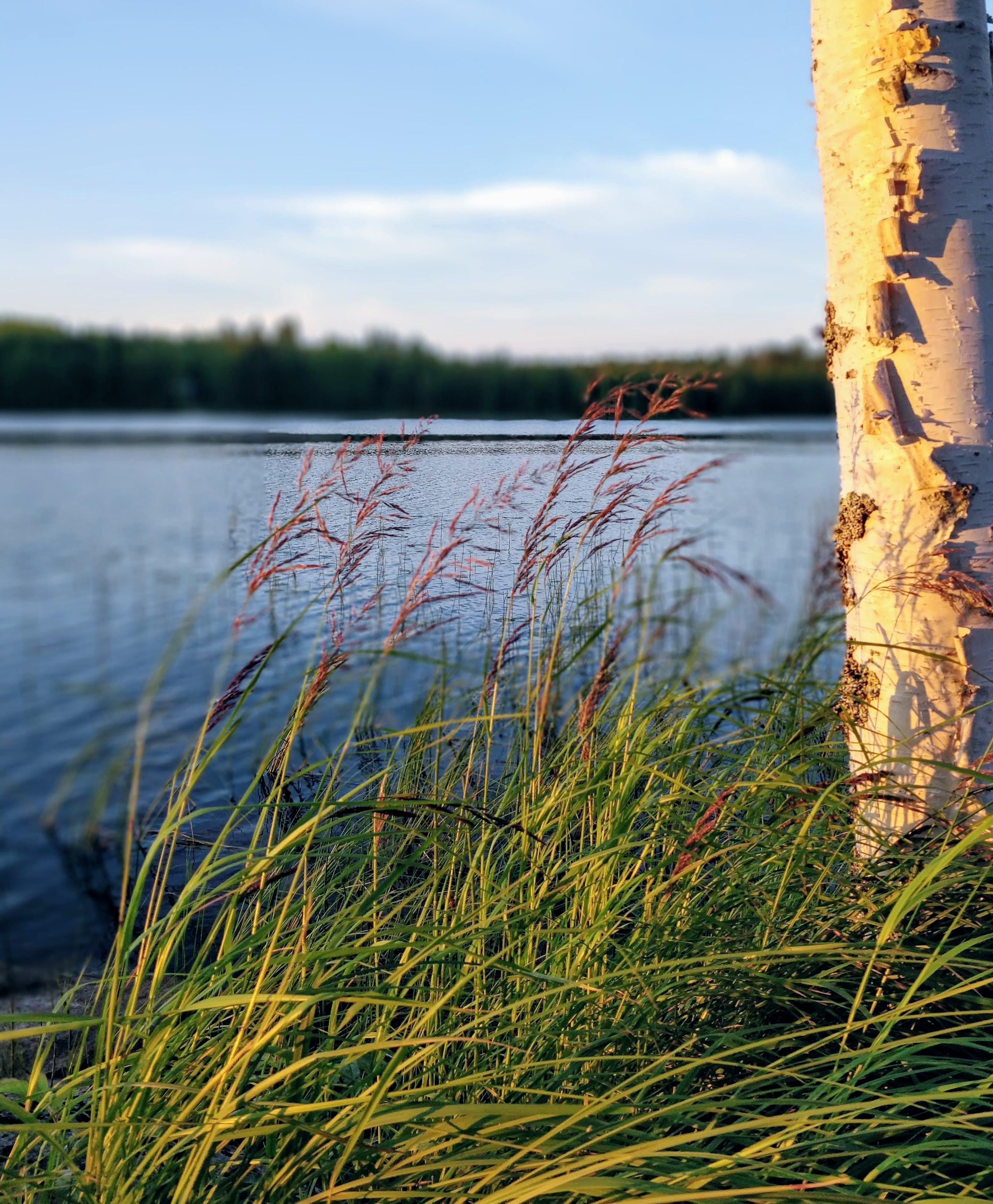 Gratis lagerfoto af aftensol, Finland, skov, sommer