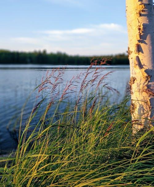 Gratis stockfoto met avondzon, Bos, Finland, strand