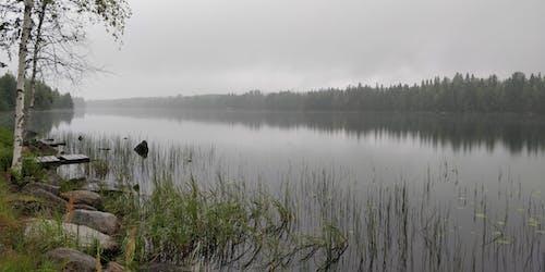 Безкоштовне стокове фото на тему «ліс, літо, після дощу, туманний»