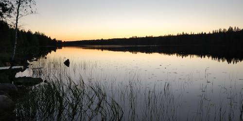 傍晚的太陽, 夏天, 日出, 森林 的 免费素材照片