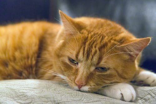 Orange Tabby Cat Lying on Beige Cushion