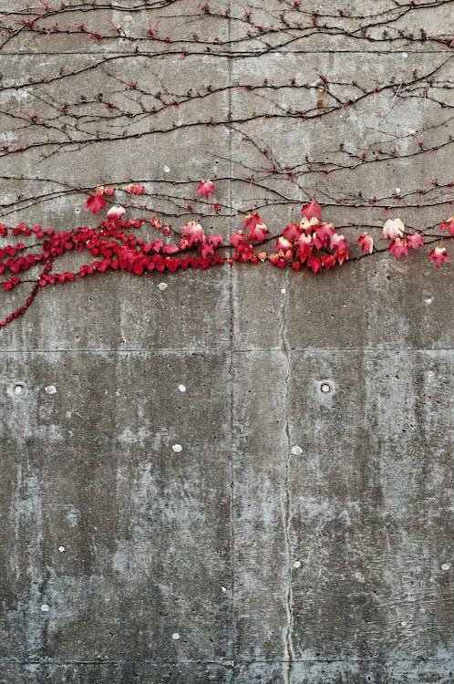 crecimiento, flora, hiedra