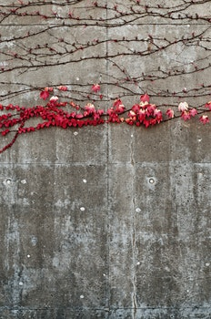 Free stock photo of nature, red, wall, leaves