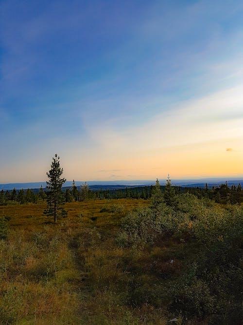 Photos gratuites de arbres, ciel bleu, ciel du soir, montagne