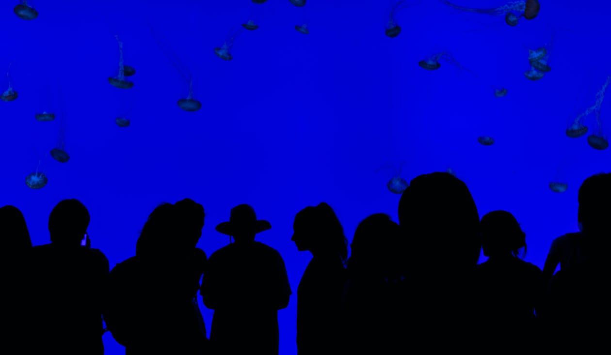 aquari, blau, exhibició