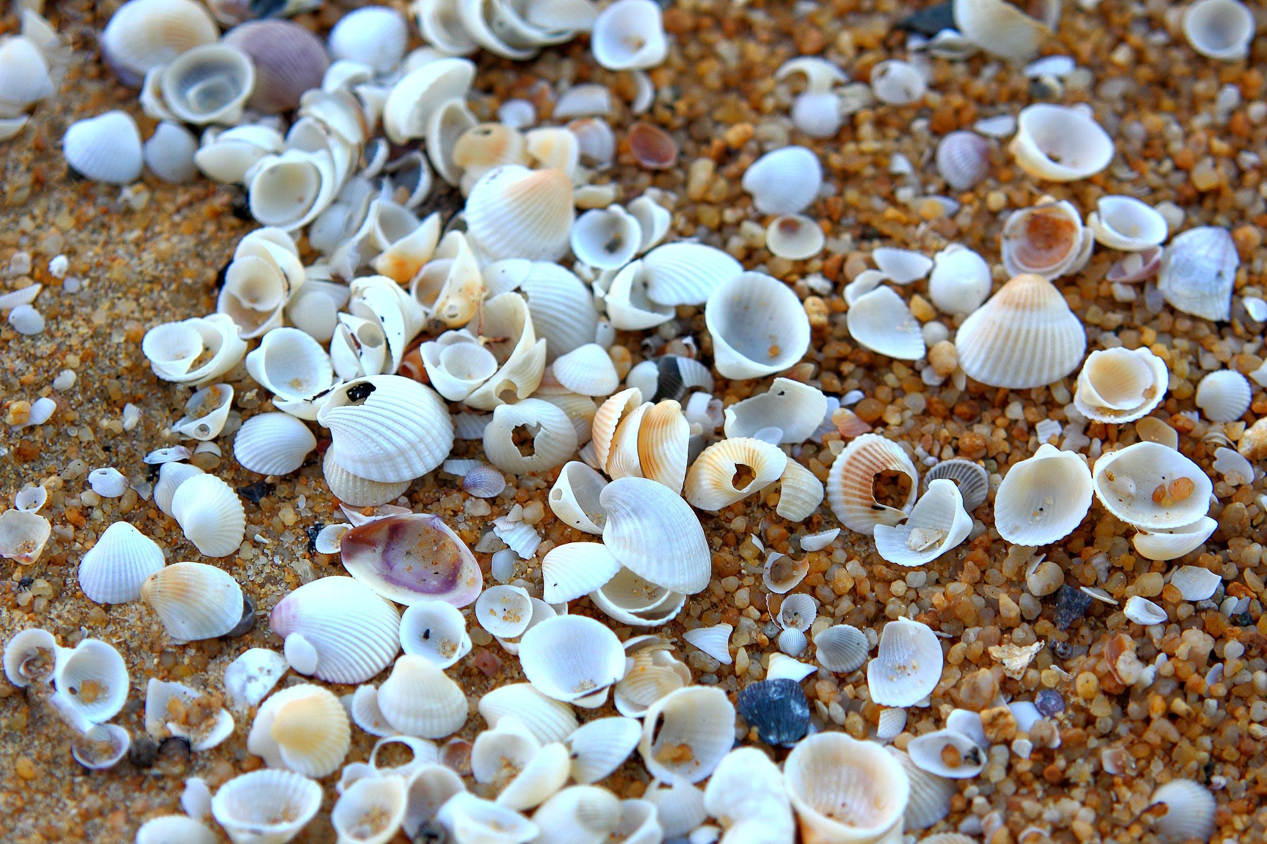 White Shell Lot on Brown Soil