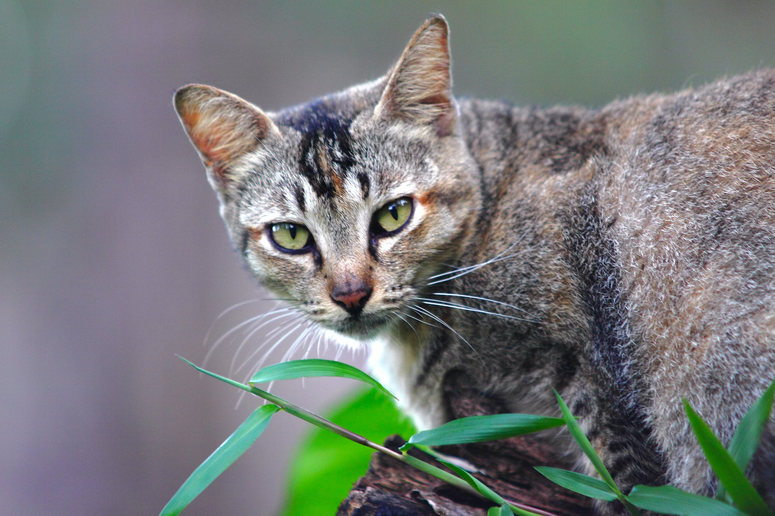 Short-furred Brown Cat on Brown Wood Near Green Grass Selective-focus Photography