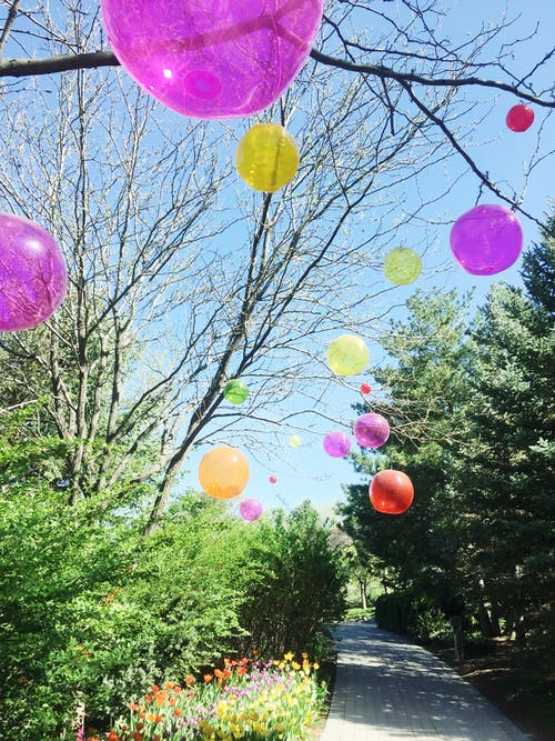 Assorted-color Balloons Attached on Tree Branches