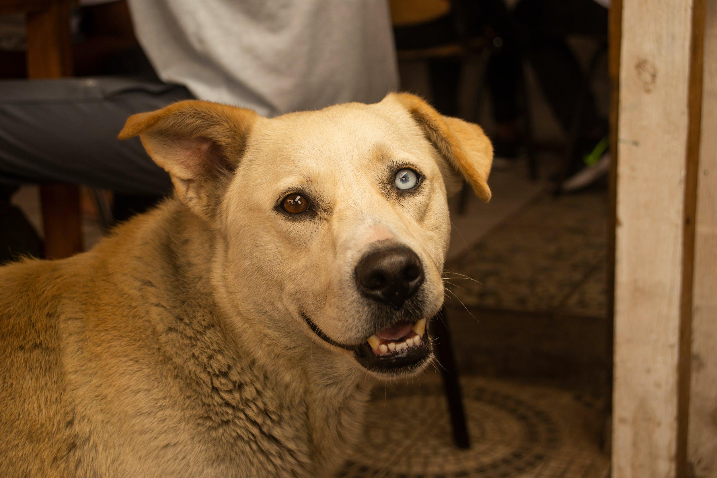 Free stock photo of dog, dogtor, eyes