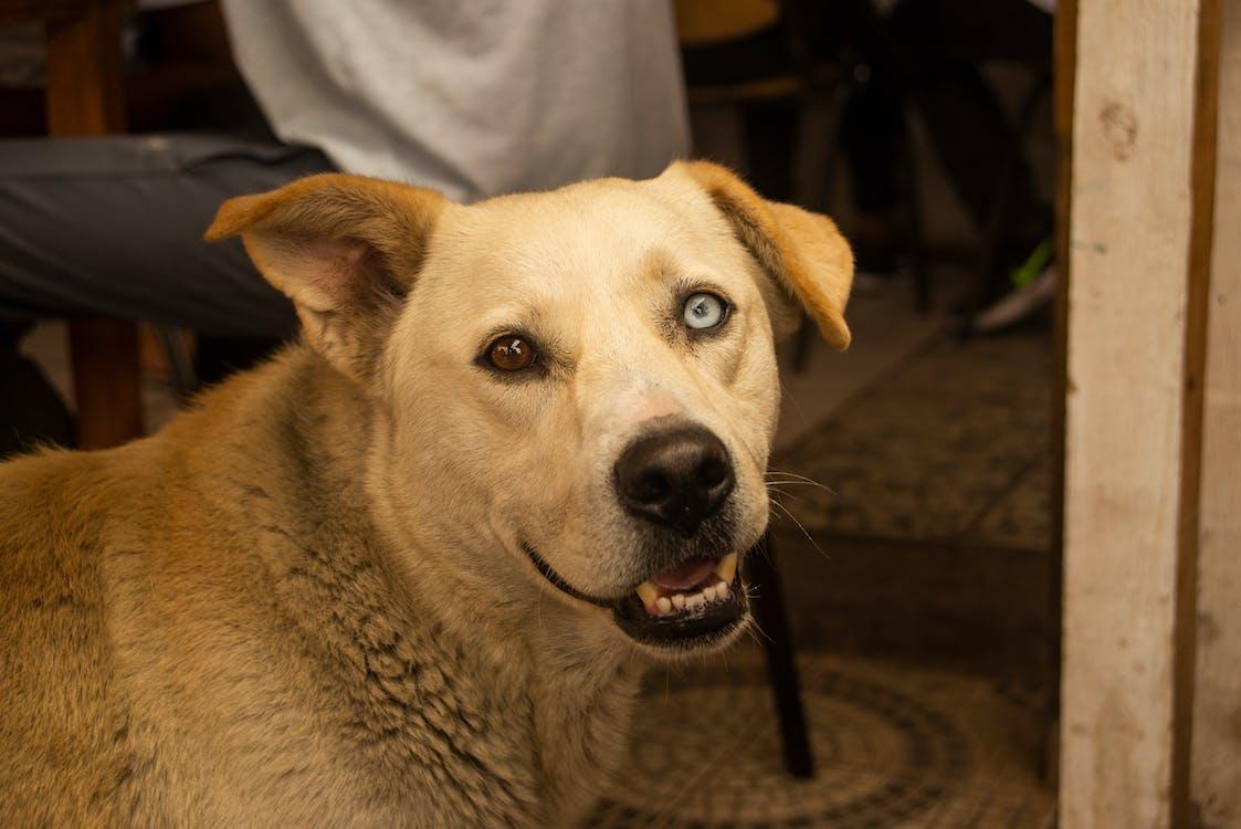 dogtor, hond, ogen