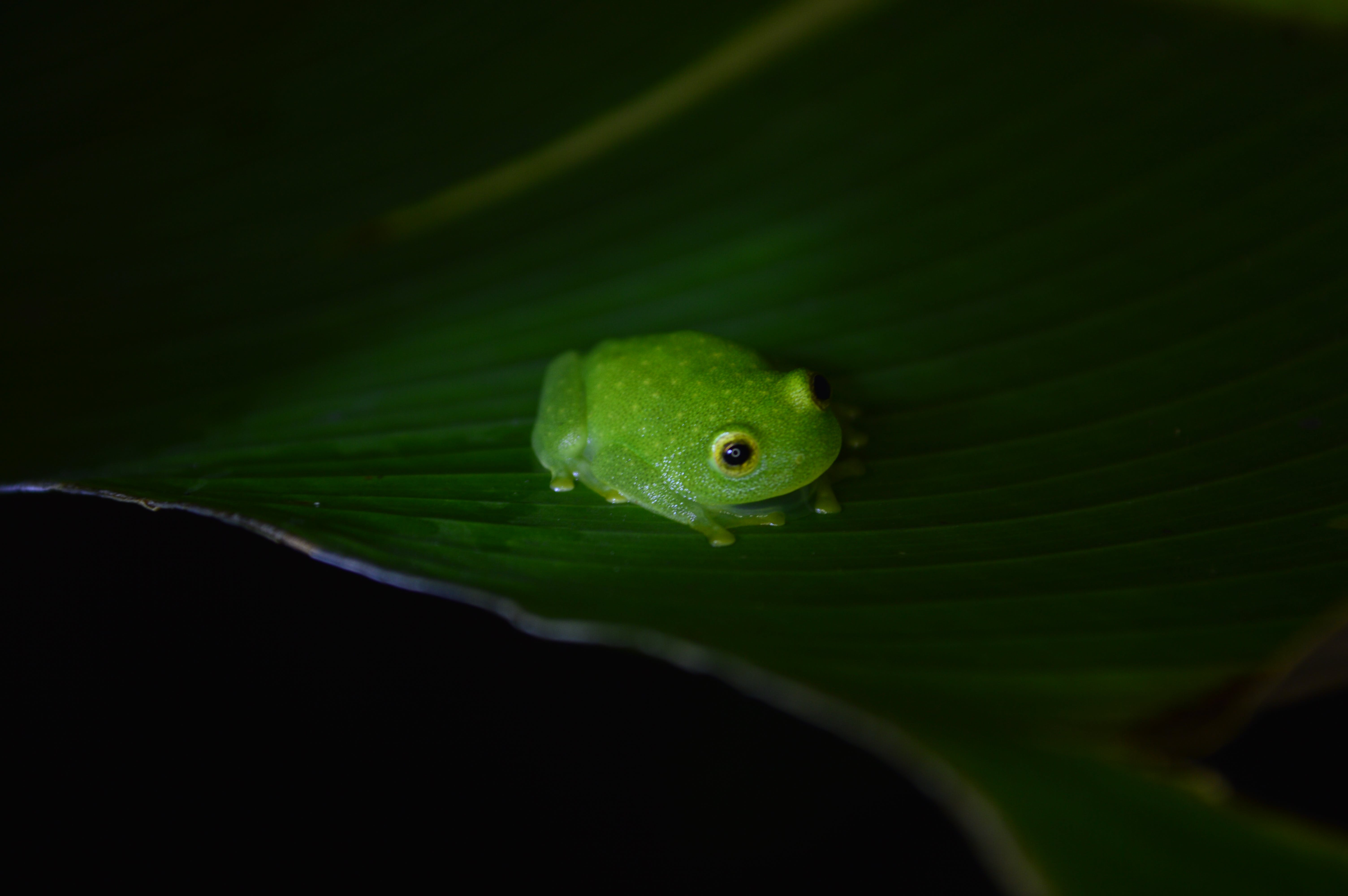 Photo of Green Frog on Leaf