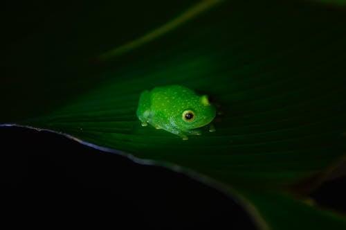 Δωρεάν στοκ φωτογραφιών με άγρια φύση, άγριος, αμφίβιος, βάτραχος