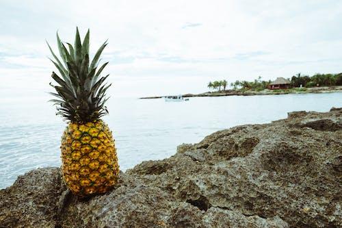 Kostenloses Stock Foto zu ananas, bäume, boot, felsen