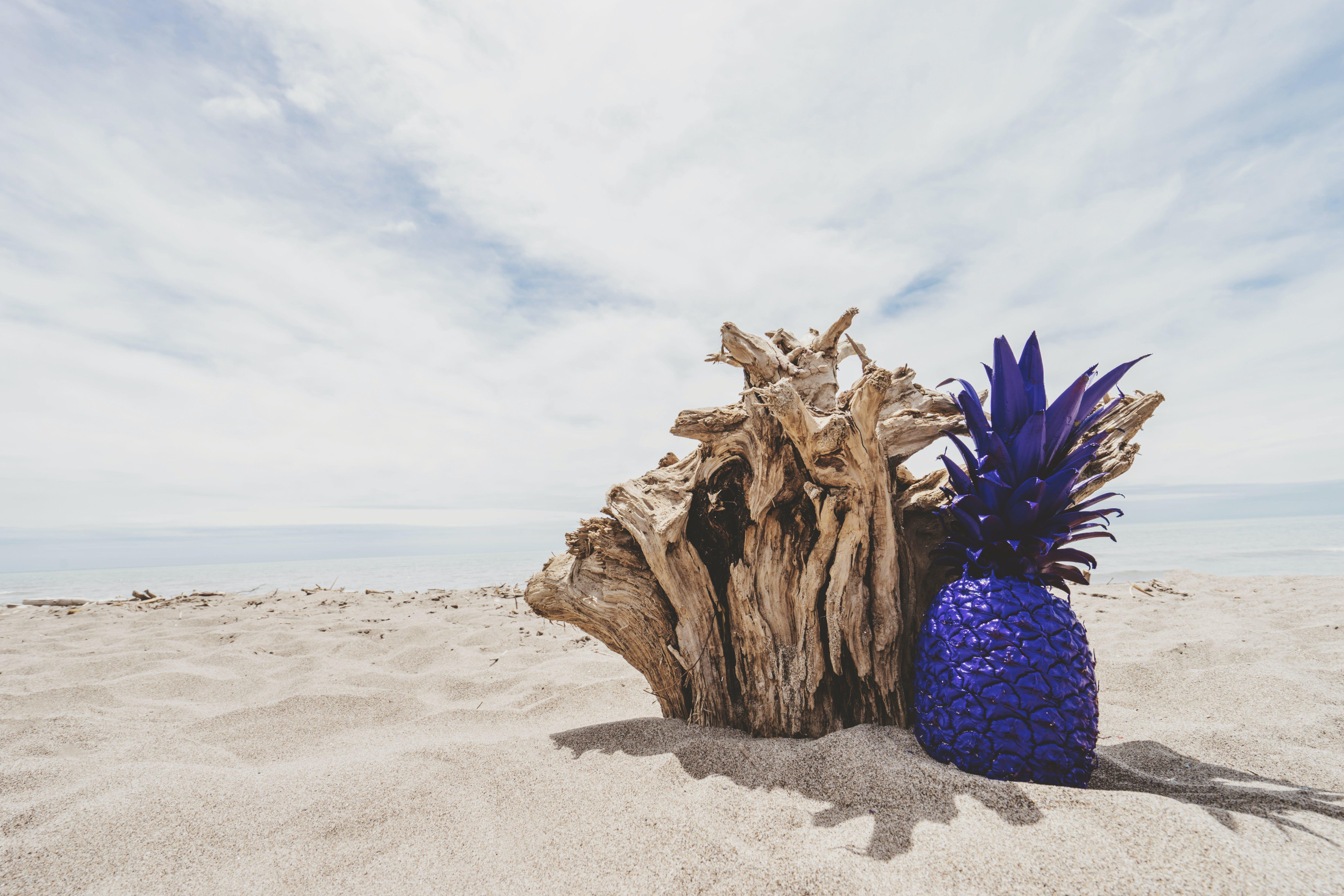Free stock photo of wood, beach, sand, water