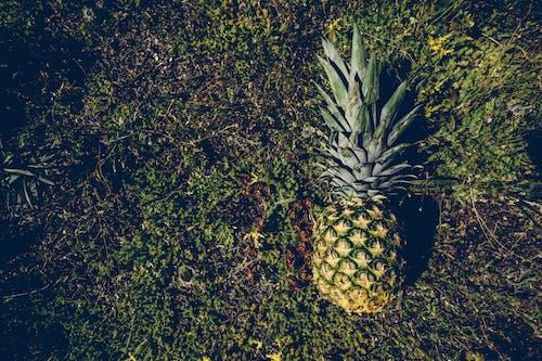 Бесплатное стоковое фото с ананас, зеленый, снимок крупным планом, трава