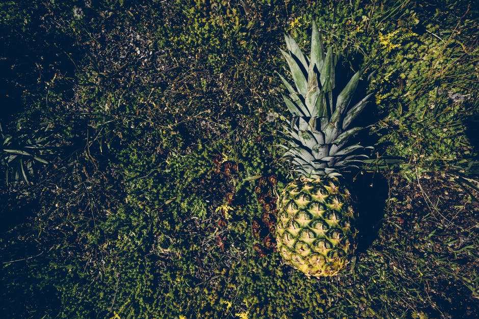 New free stock photo of grass, leaves, pineapple