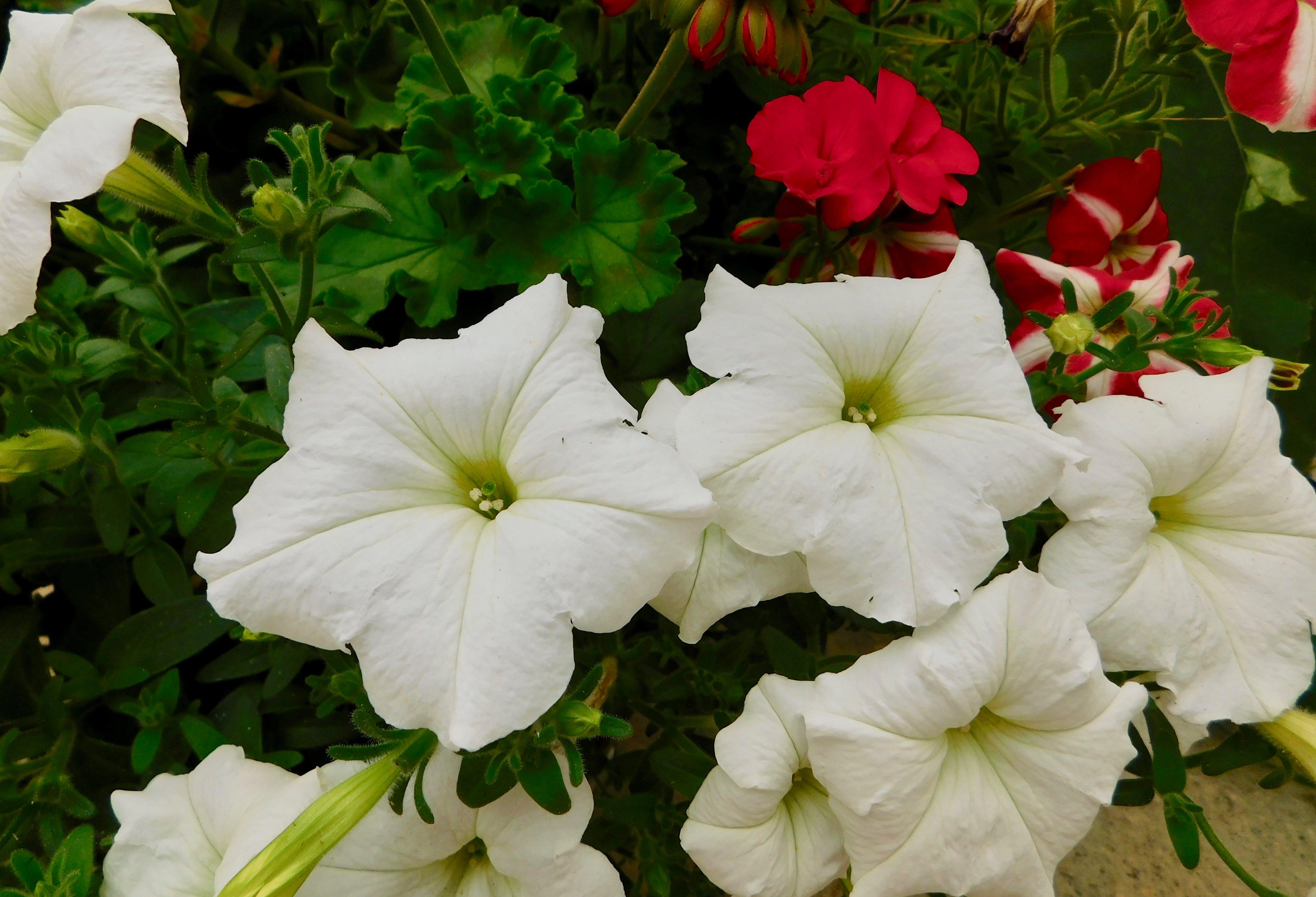 beautiful flowers, botany