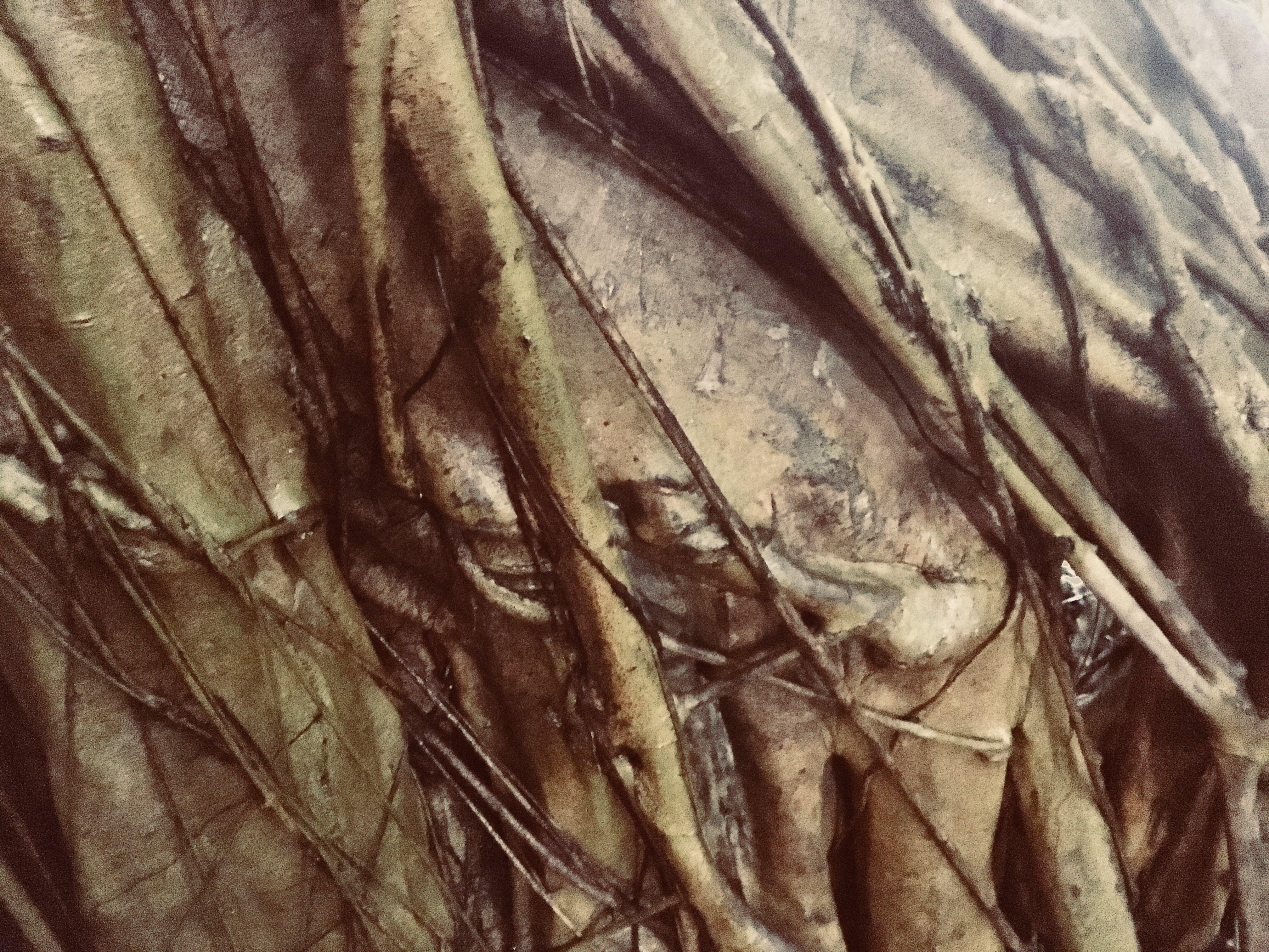 Free stock photo of bark, bodhi, texture, tree