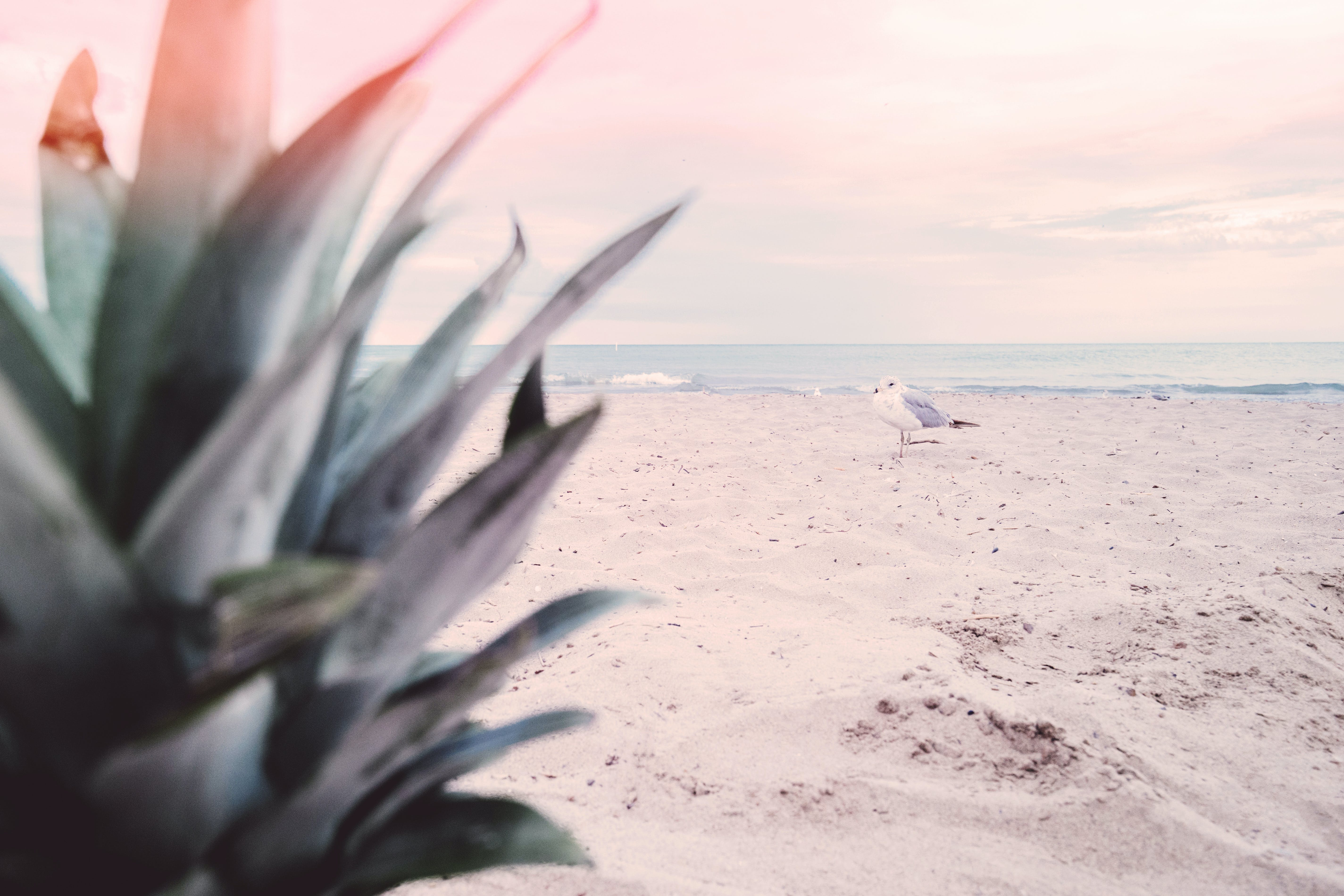 Free stock photo of sea, bird, beach, sand