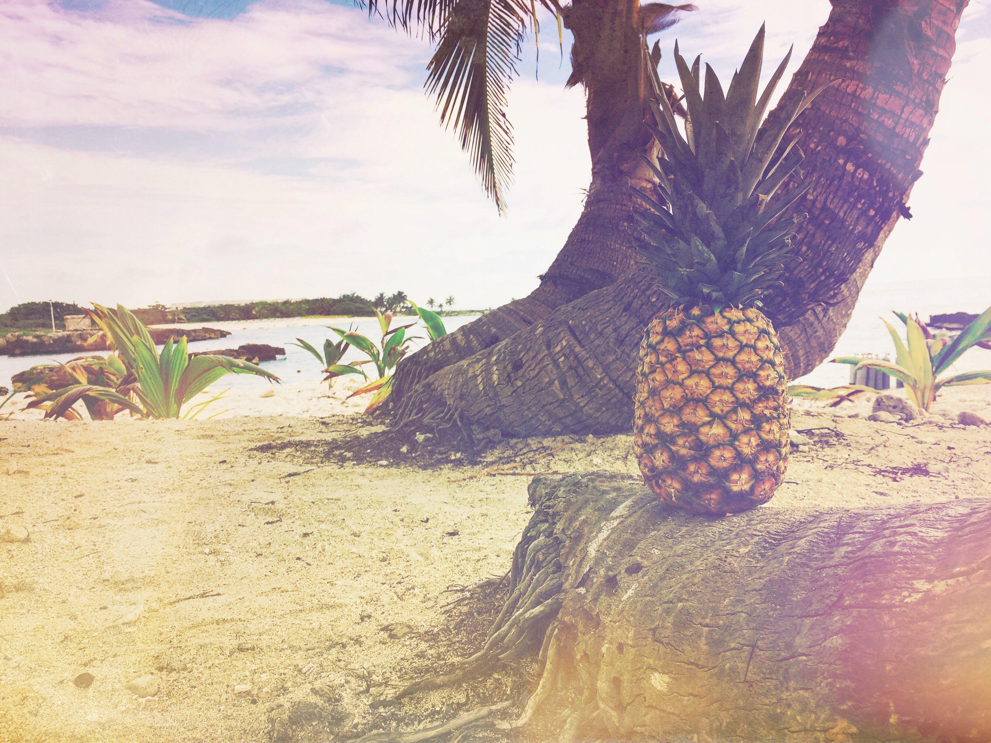 Yellow Pineapple on Coconut Tree