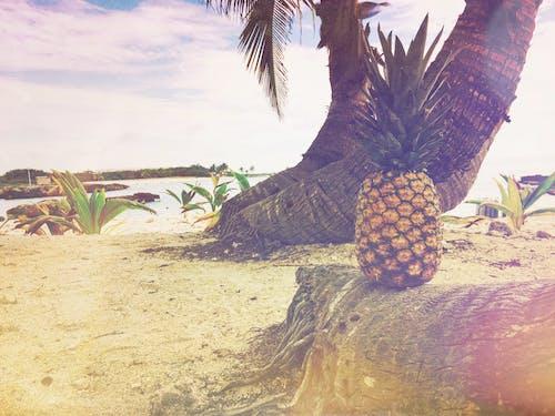 Безкоштовне стокове фото на тему «ананас, берег моря, вода, море»