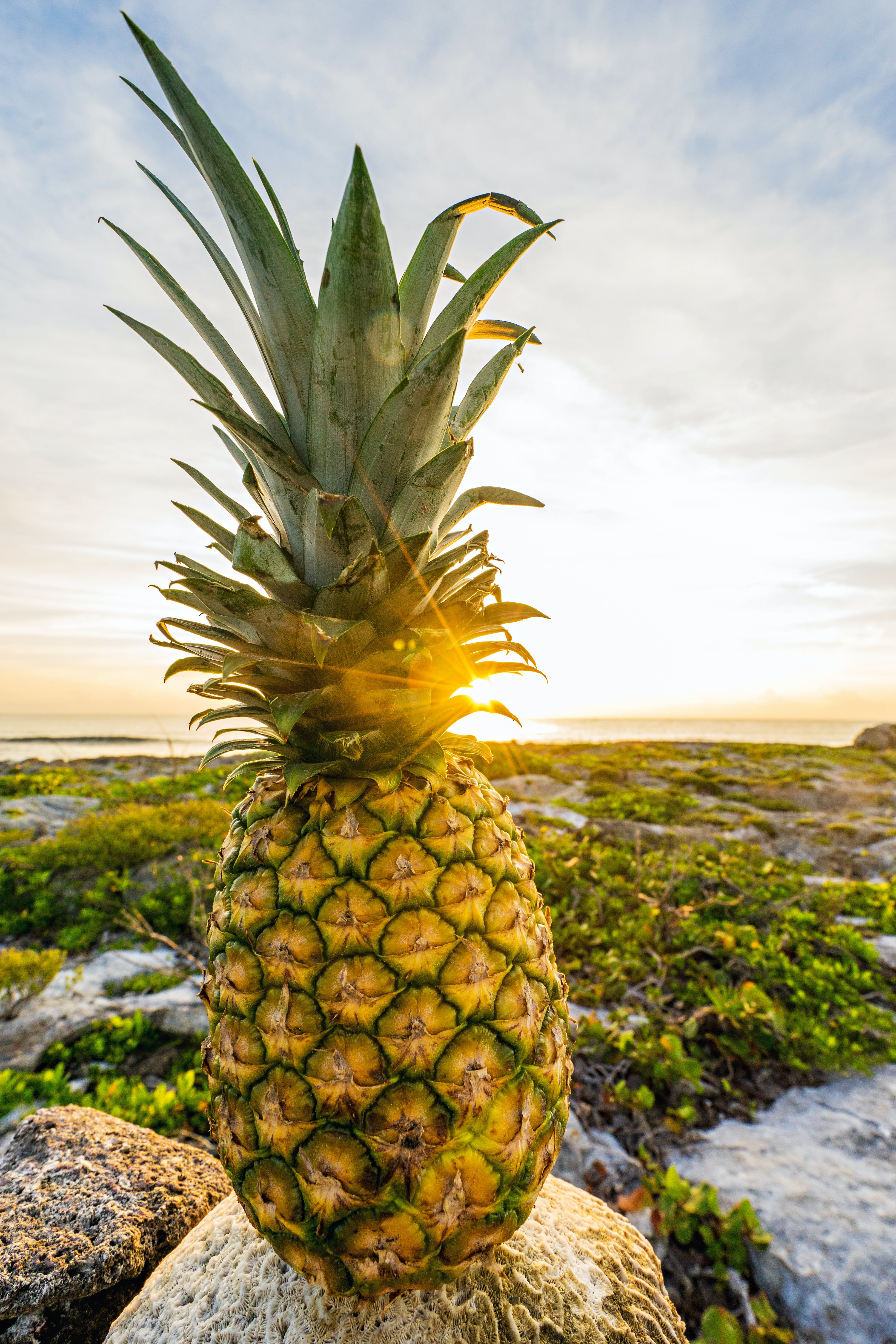 Pineapple Fruit on Rock Taken Under White Clouds