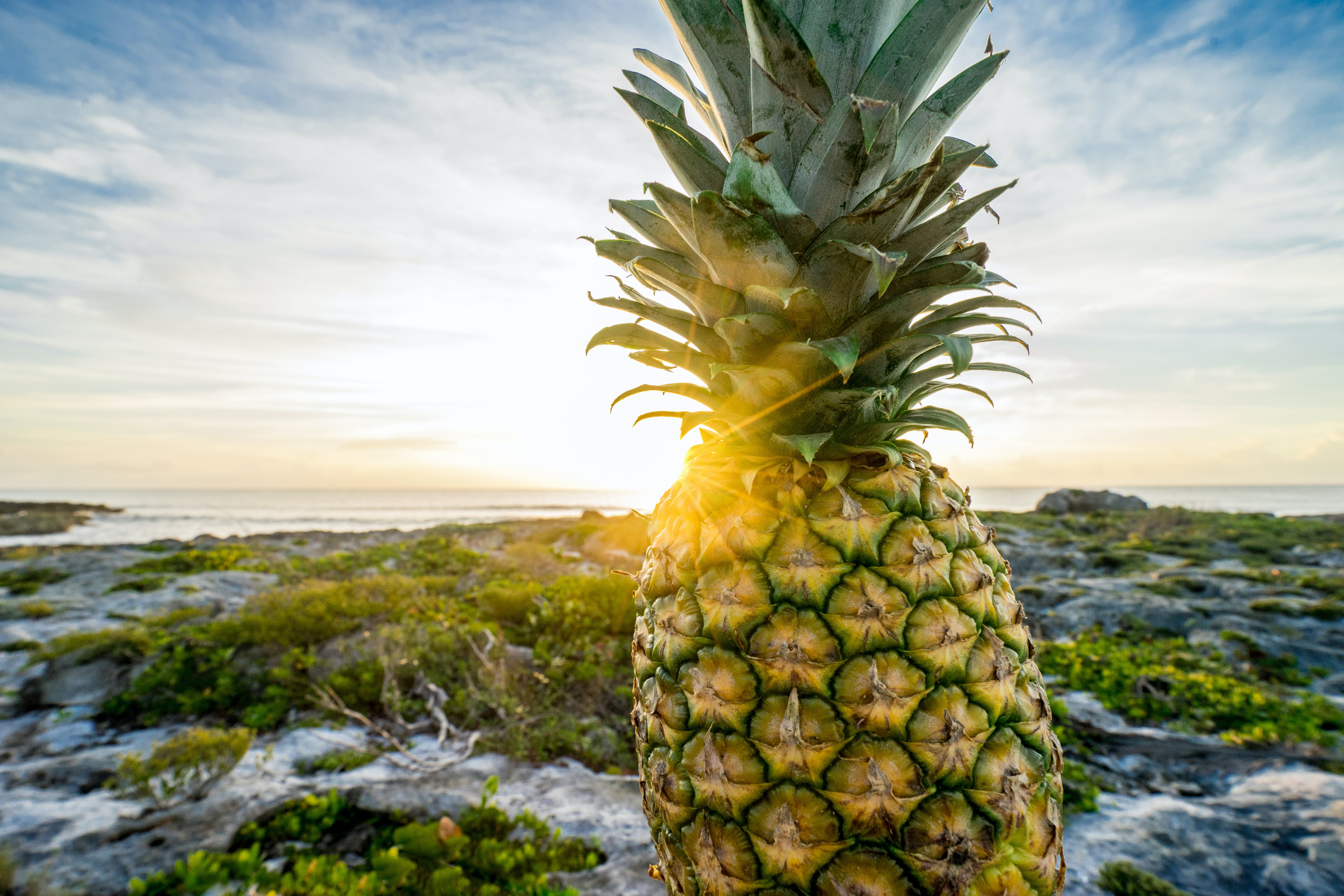 Yellow Pineapple Near Green Plants and Sea Close-up Photography