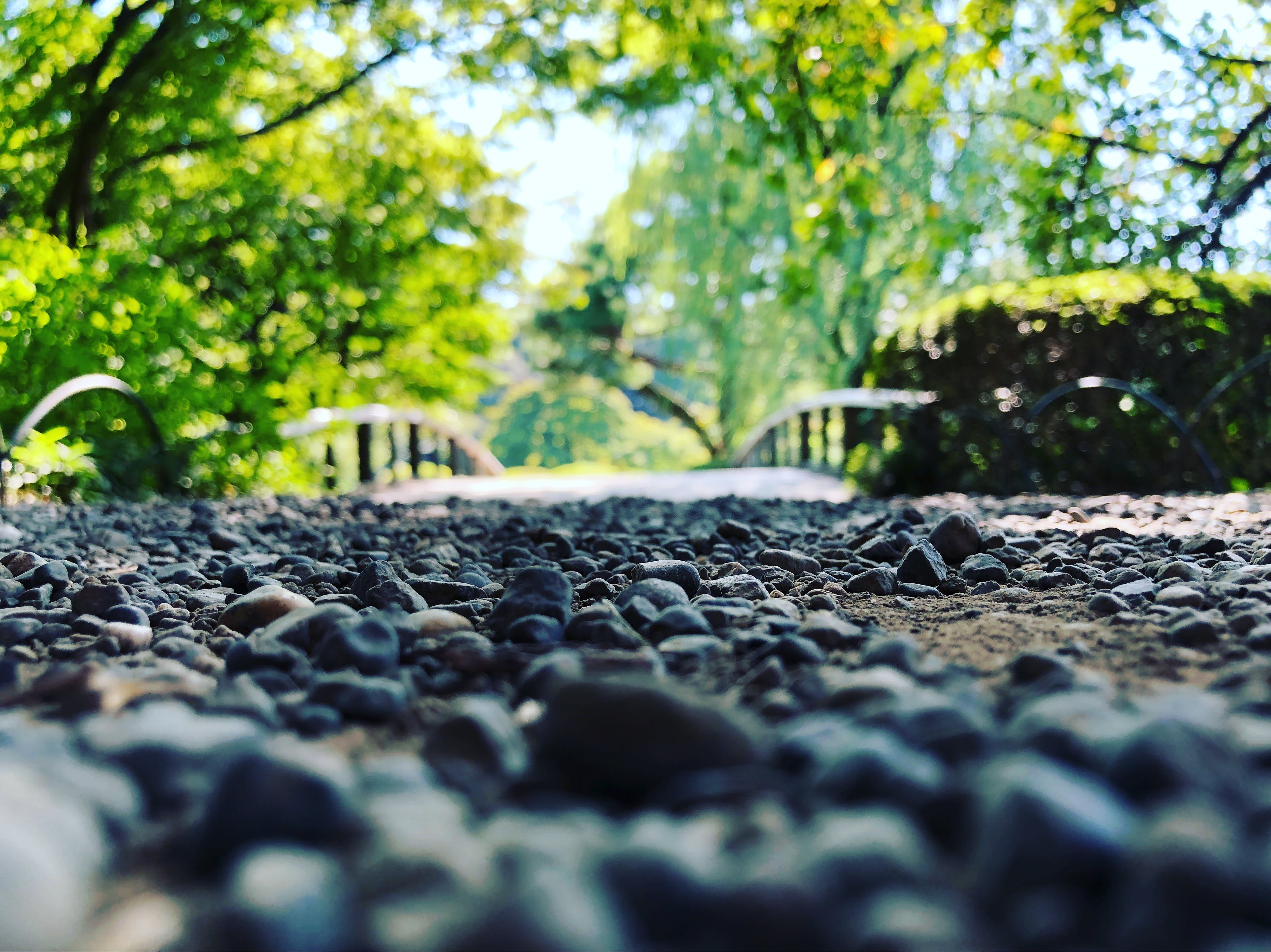 Selective Focus Photo of Stone Under Green Trees