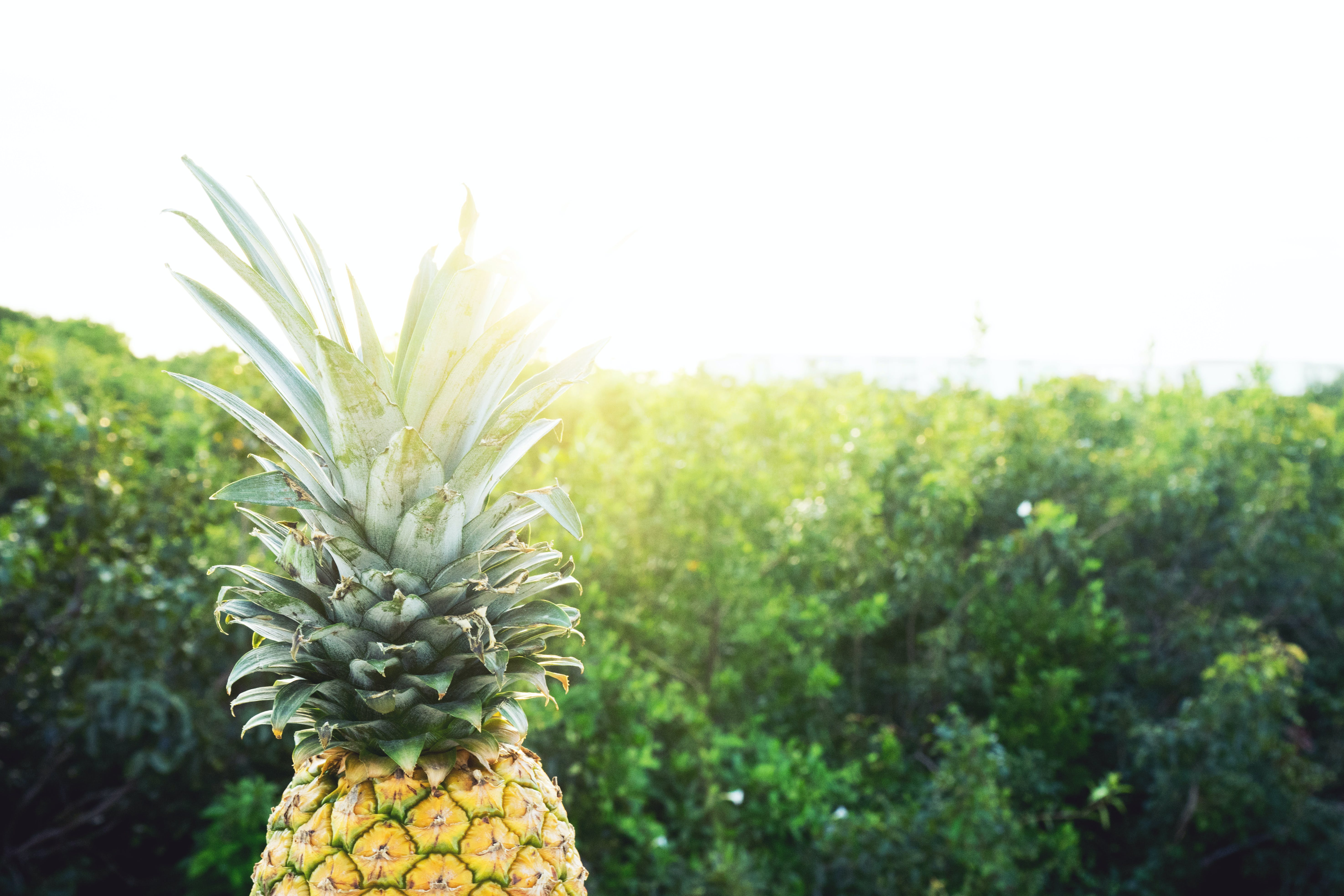 Pineapple in Front of Green Grass