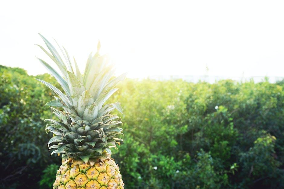 New free stock photo of nature, sunny, pineapple