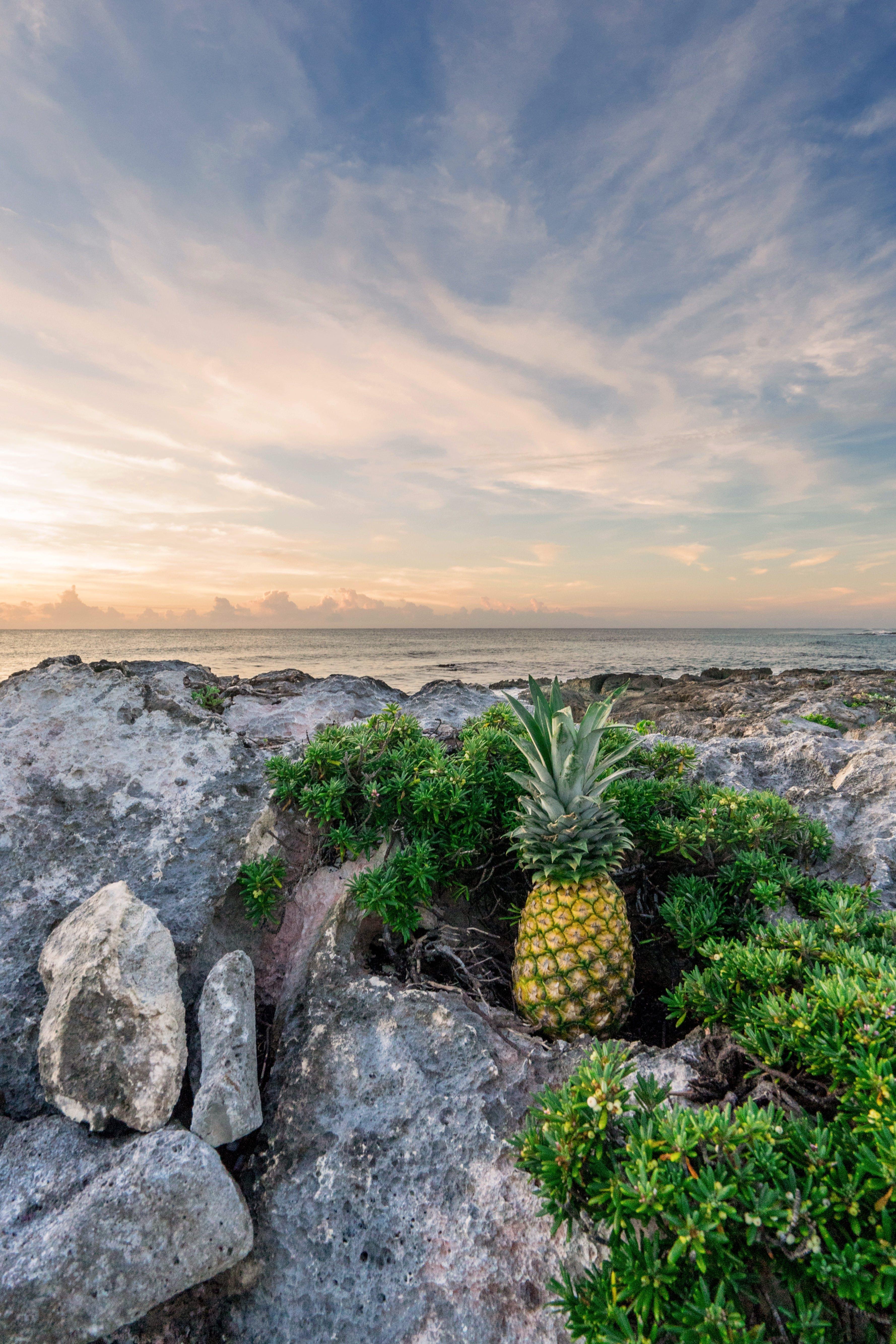 Pineapple Fruit on Rock