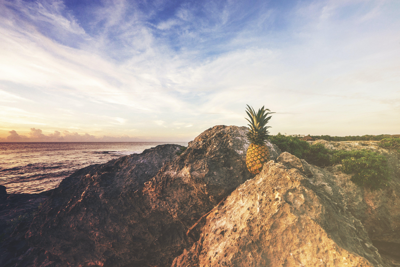 Pineapple Fruit on Rock Mountain Near Ocean