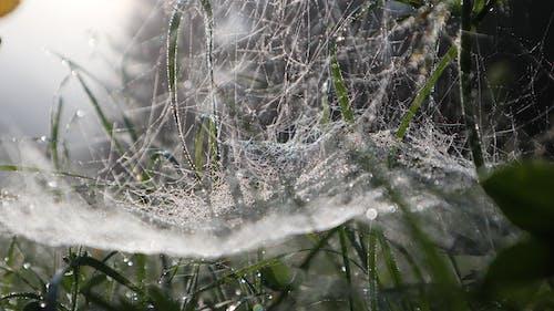 Free stock photo of cobweb, early morning, green, meadow