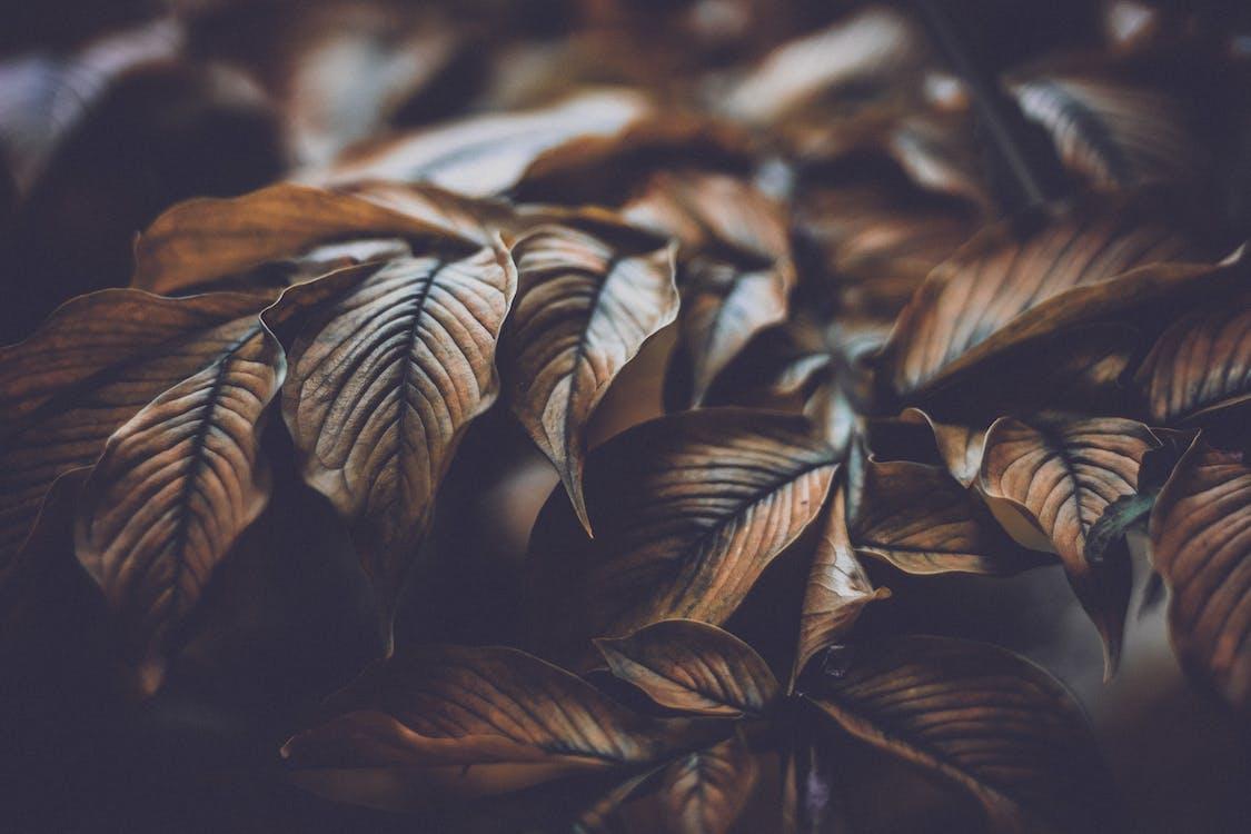 arbre, brouiller, brun