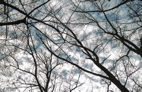 Imagine de stoc gratuită din arbori, codru, fundal, natură